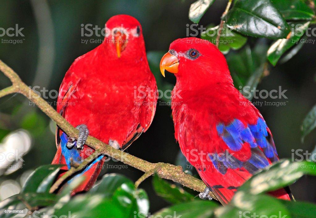 鸚鵡 免版稅 stock photo