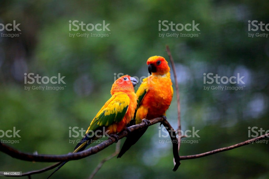 parrot foto stock royalty-free