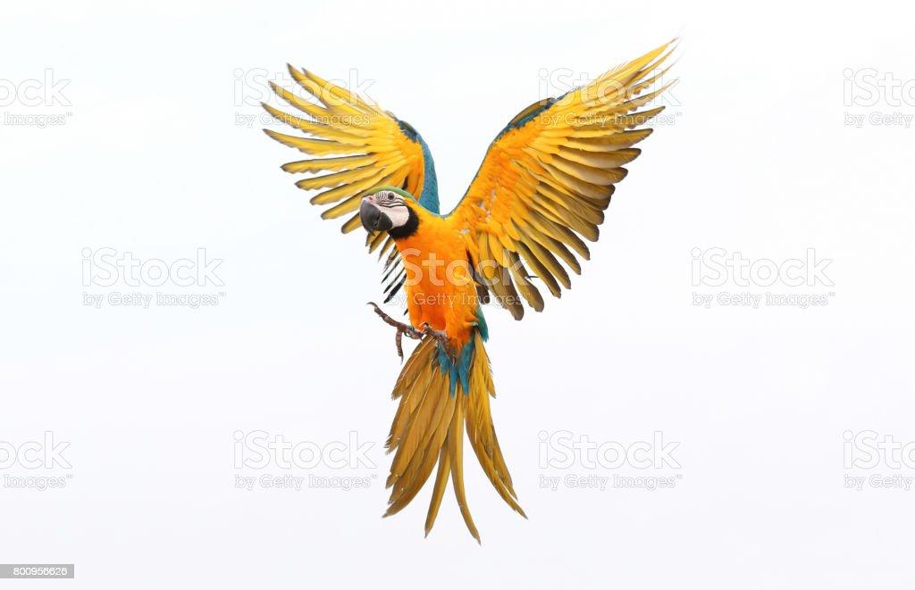 parrot - foto stock
