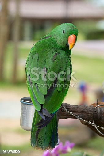Parrot Stock Photo & More Pictures of Animal