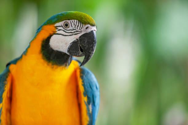 Parrot – Foto