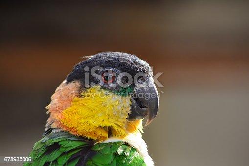 1153034372istockphoto Parrot portrait 678935006