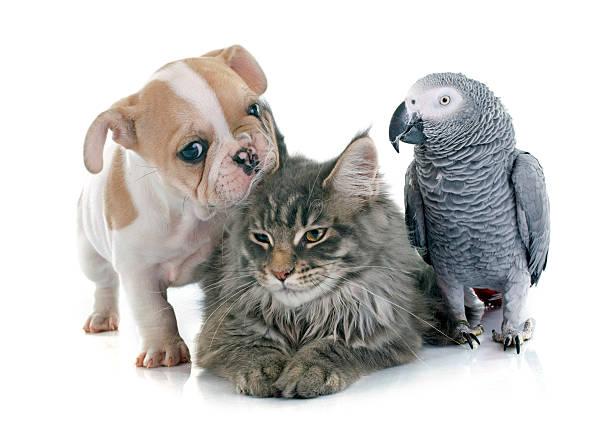 Parrot puppy and cat picture id480202588?b=1&k=6&m=480202588&s=612x612&w=0&h=osdrljuyos57peajhgln1v2282au60cyxe3fncbulei=