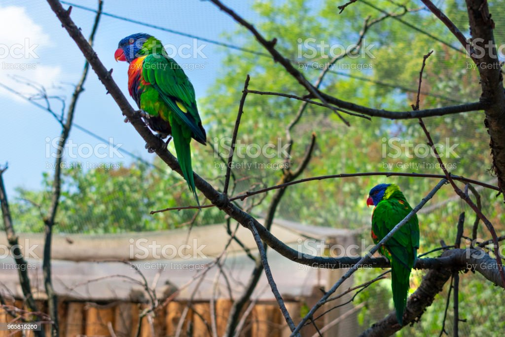 Parrot sitting on a tree branch - Royalty-free Animal Stock Photo