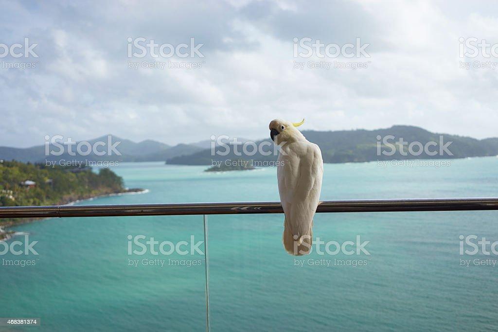parrot standing on balcony stock photo