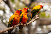 Parrot Sun Conure perched on branches.