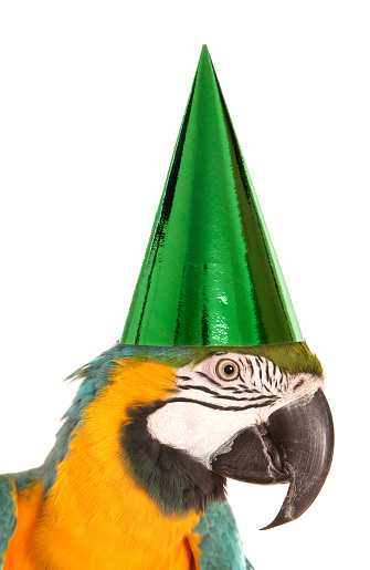 parrot wearing a birthday party hat studio cutout