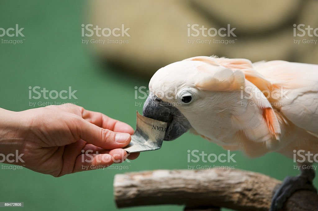 Parrot with money royalty-free stock photo