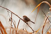 A bird is resting in the autumn landscape