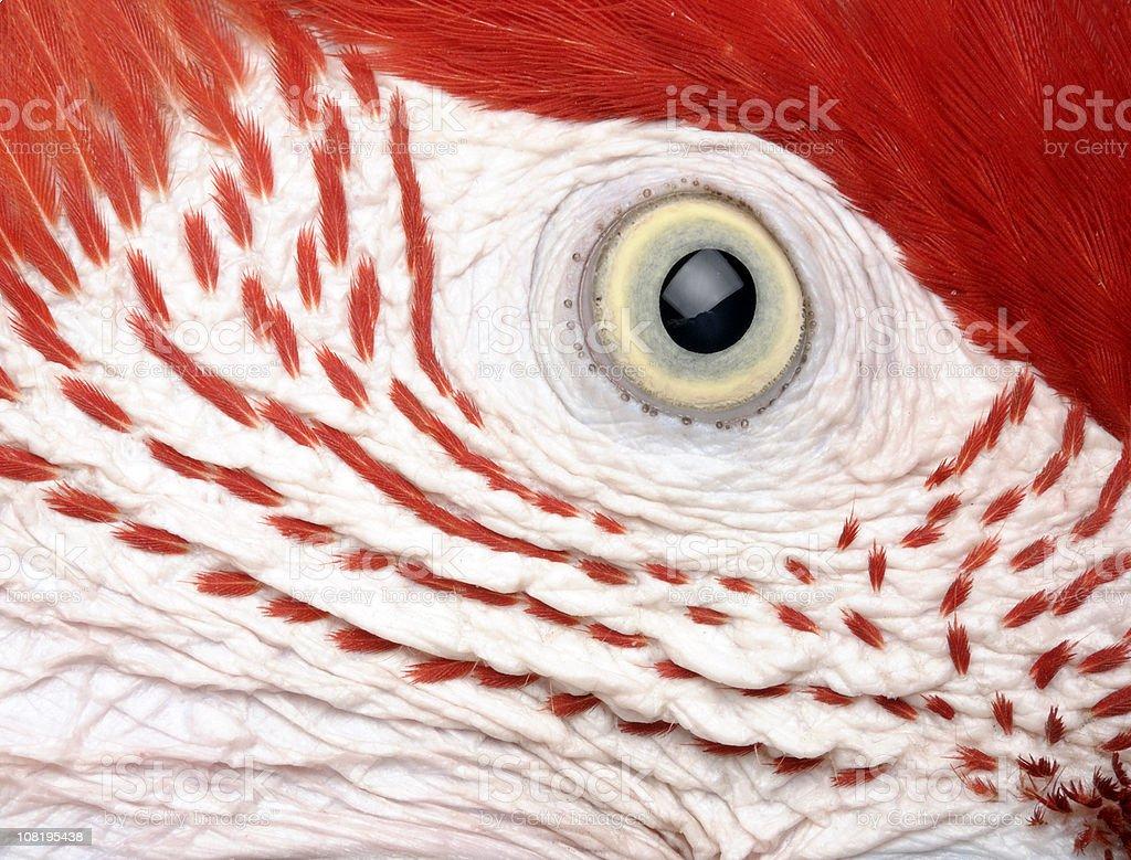 Parrot's Eye royalty-free stock photo