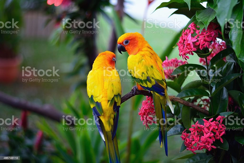 Parrots image stock photo