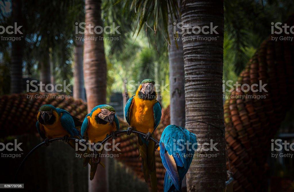 Parrots in the tropical garden stock photo