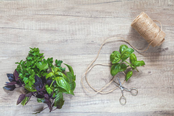 Parsley and basil bunch of bouquets, scissors and rope cord on light wooden surface. stock photo