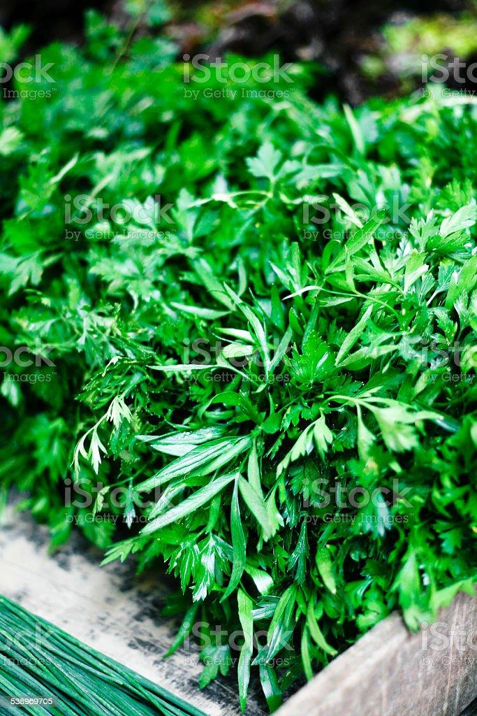 parsley at the market stock photo