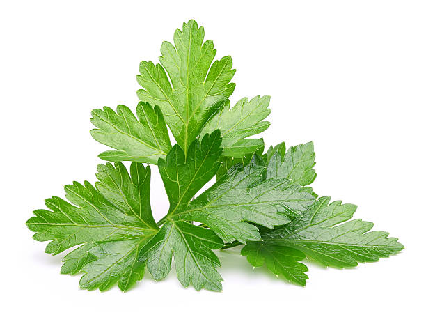 parsley herb isolated - parsley stock photos and pictures