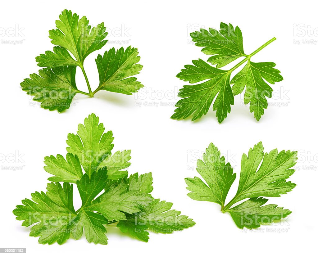 Parsley herb isolated stock photo