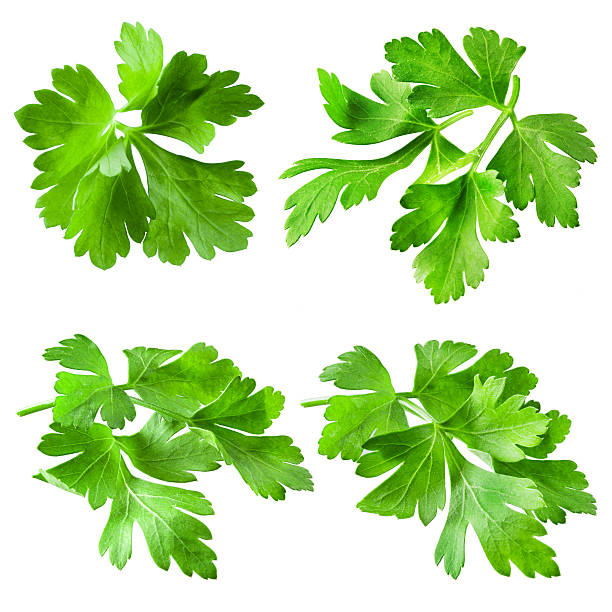 parsley isolated on white background. collection - maydanoz stok fotoğraflar ve resimler