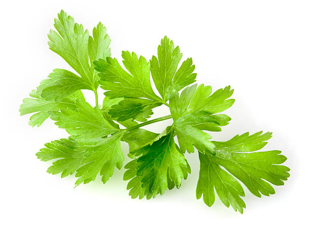 parsley isolated on white background - parsley stock photos and pictures