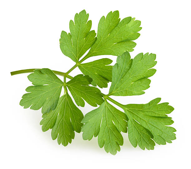 parsley isolated - parsley stock photos and pictures