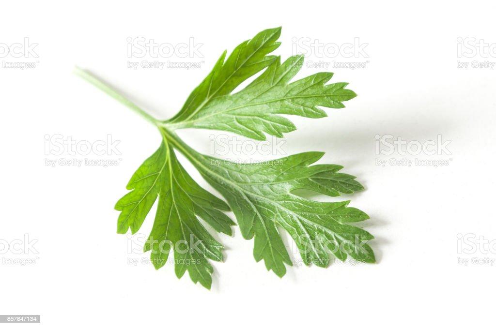 imagem de folha de salsa
