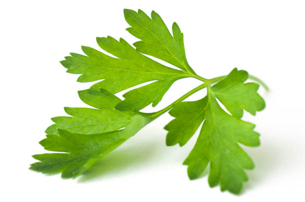 parsley leaf - parsley stock photos and pictures
