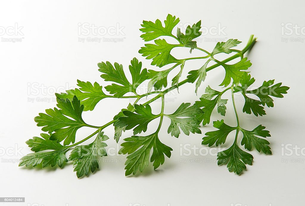 Parsley leaves stock photo