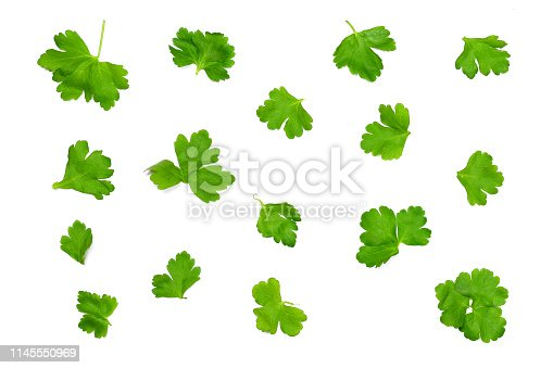 parsley leaves isolated on a white background are scattered randomly, to use as a background