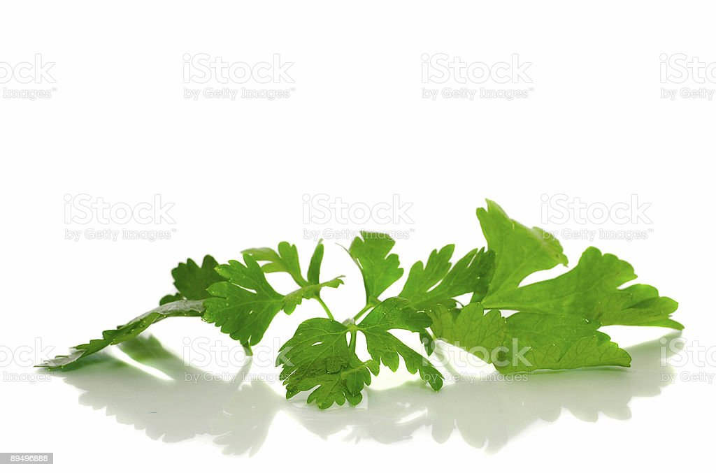 Parsley on a white background royalty free stockfoto