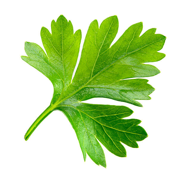 parsley. one leaf isolated on white background. - parsley stock photos and pictures