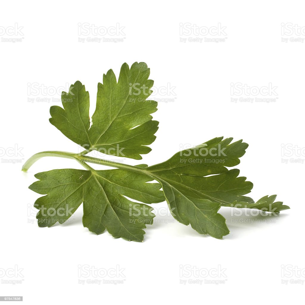parsley over white background royalty-free stock photo