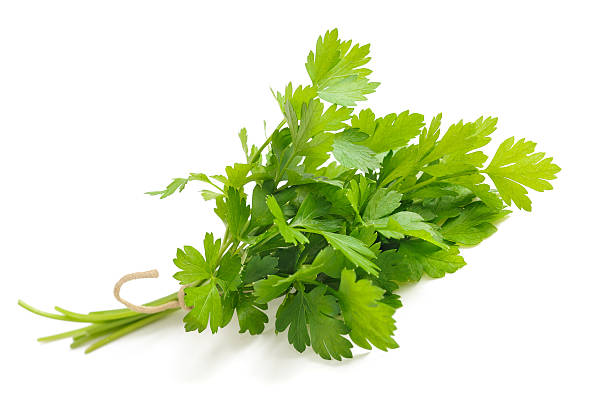 Parsley Fresh parsley bunch isolated on white background cilantro stock pictures, royalty-free photos & images