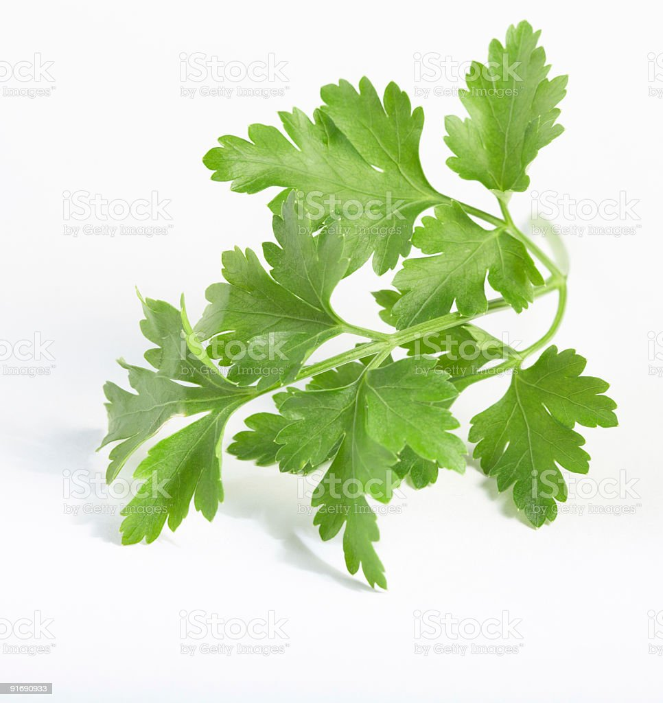 parsley twig royalty-free stock photo