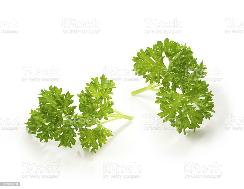 Parsley Twigs stock photo