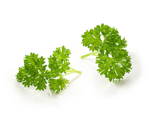 parsley twigs - parsley stock photos and pictures