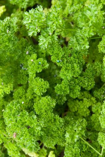 parsley vertical