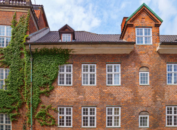 part of a beautiful house in the city of copenhagen. brick building wall with windows is entwined with ivy - ivy building imagens e fotografias de stock
