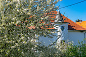 A part of a cherry tree in full bloom in a garden with a house with a witch hat roof in the background. Germany