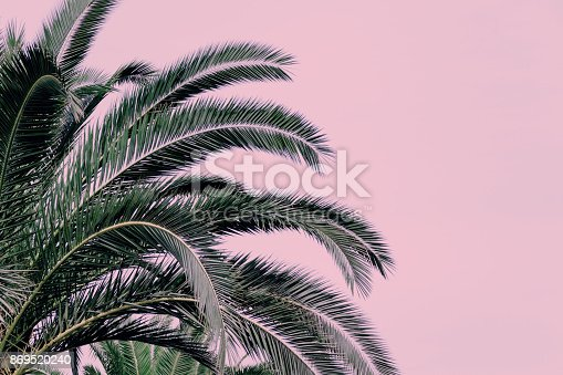 Part of a palm tree on a pink background. Copy space.
