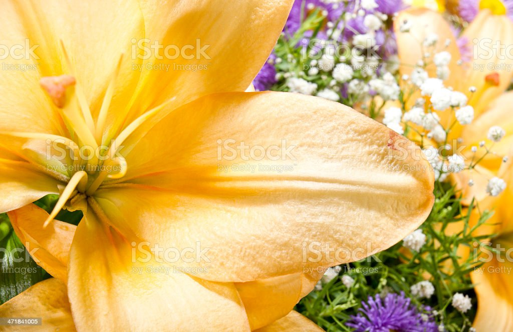 Part of a yellow lily royalty-free stock photo