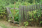 istock part of an old gray wooden fence with broken boards overgrown with green vegetation 1265170494
