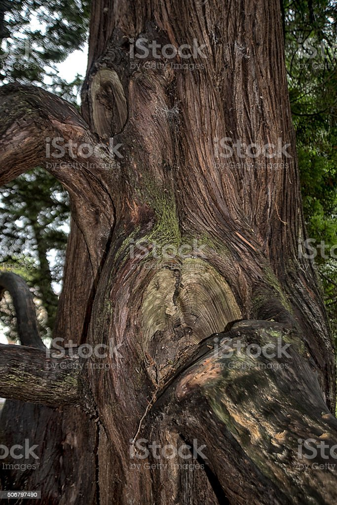 Part of an old tree with broken branch stock photo