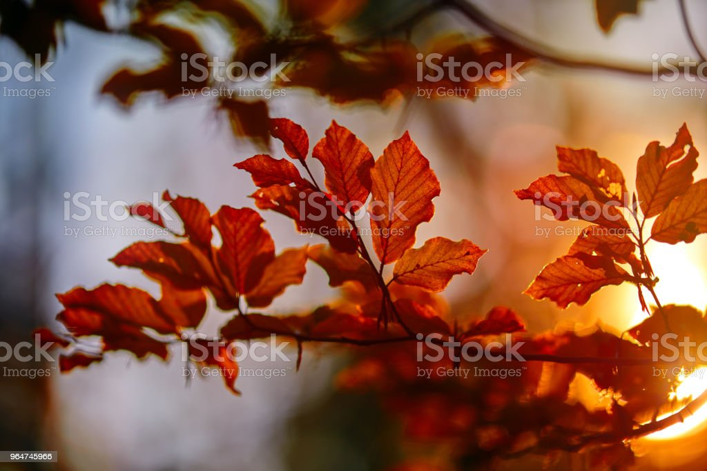 part of beautiful autumn royalty-free stock photo