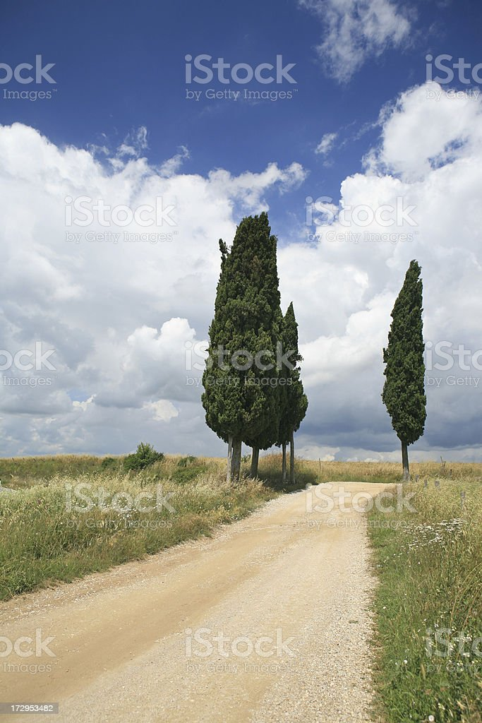 Part of cypress lined road in Tuscany royalty-free stock photo