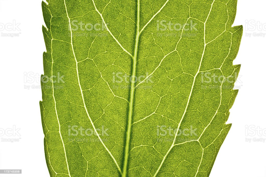 part of green leaf in close up royalty-free stock photo
