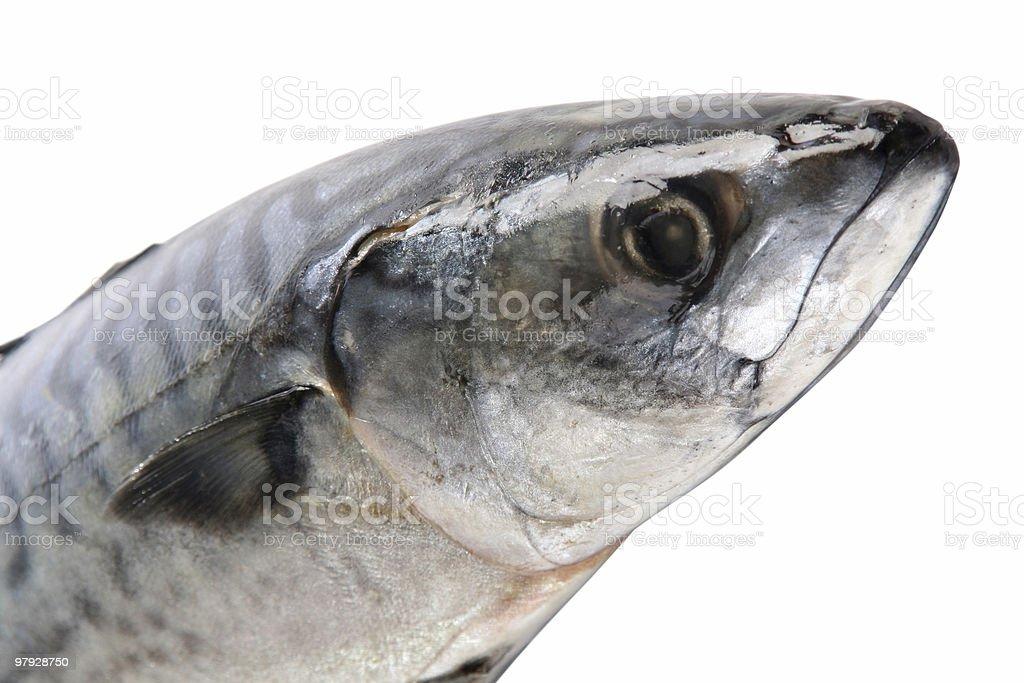 Part of mackerel royalty-free stock photo