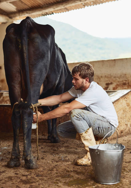milking pictures Male