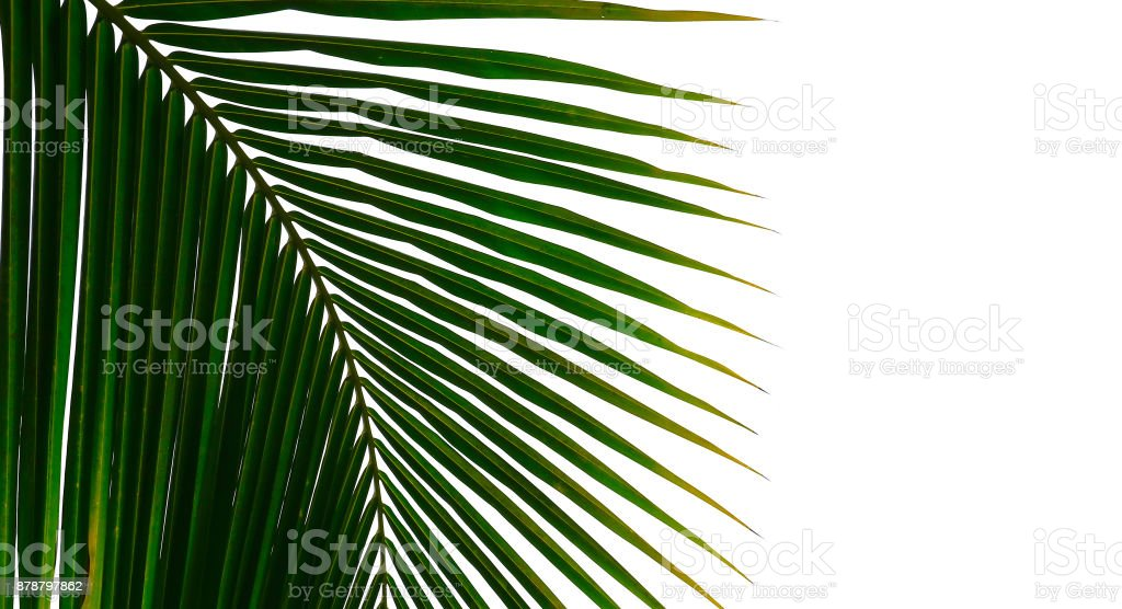 Part of palm tree stock photo