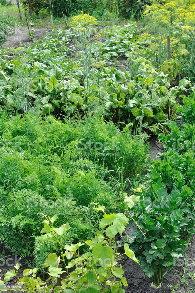 part of the vegetable garden stock photo