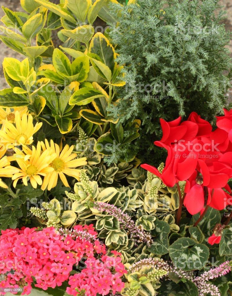 Image De Parterre De Fleurs parterre de fleurs jardin paysagé stock photo - download