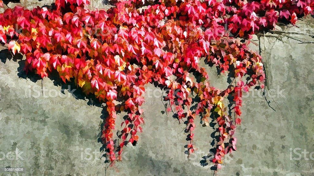 Parthenocissus tricuspidata red leaves stock photo